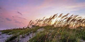 top hilton head attractions 2018