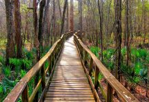 Congaree National Park Columbia SC sctravelguide
