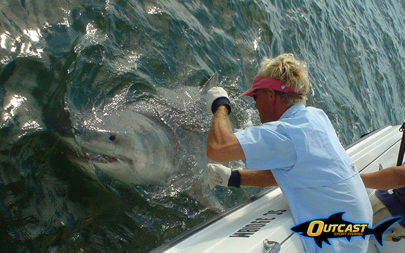 Chip Michalove Tags a great white shark in South Carolina